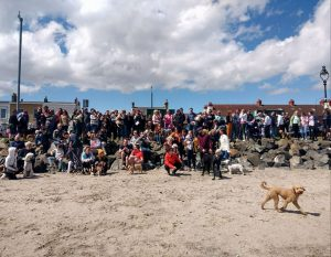 A large group of dog owners gathered at Sandymount Strand with their canine friensd